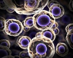 دانلود پاورپوینت پروتئینهای تک یاخته